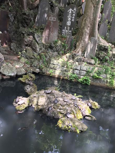 成田山境内の池 亀