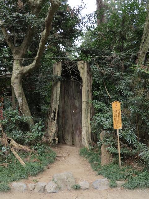 香取神宮 三本杉